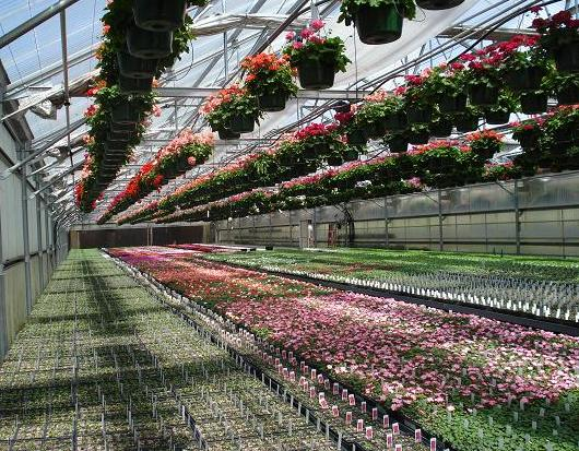 viw of inside the greenhouses